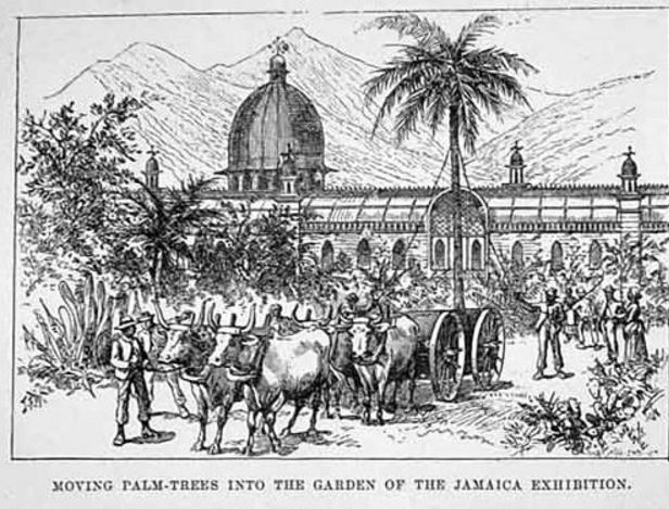 jamaica-exhibition-1891